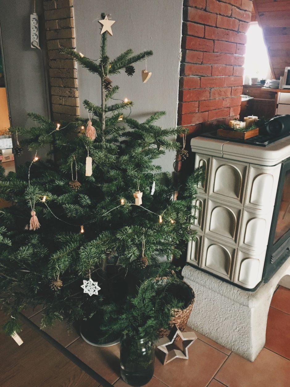 Vánoční stromeček v květináči